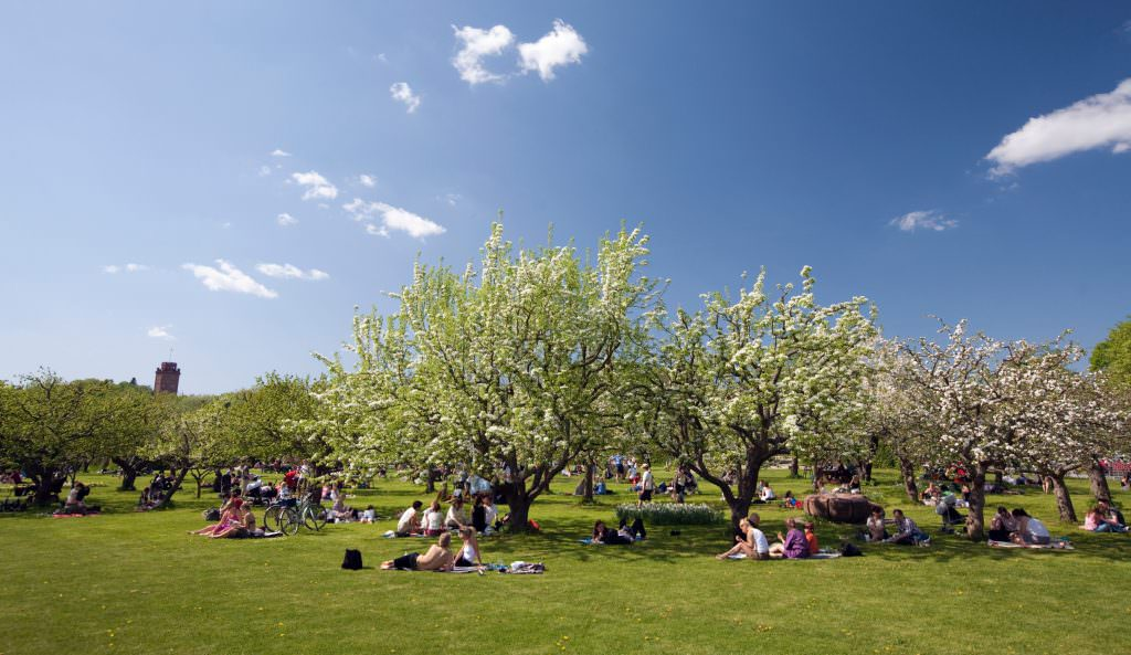 ola_ericson-spring_picnic-1692