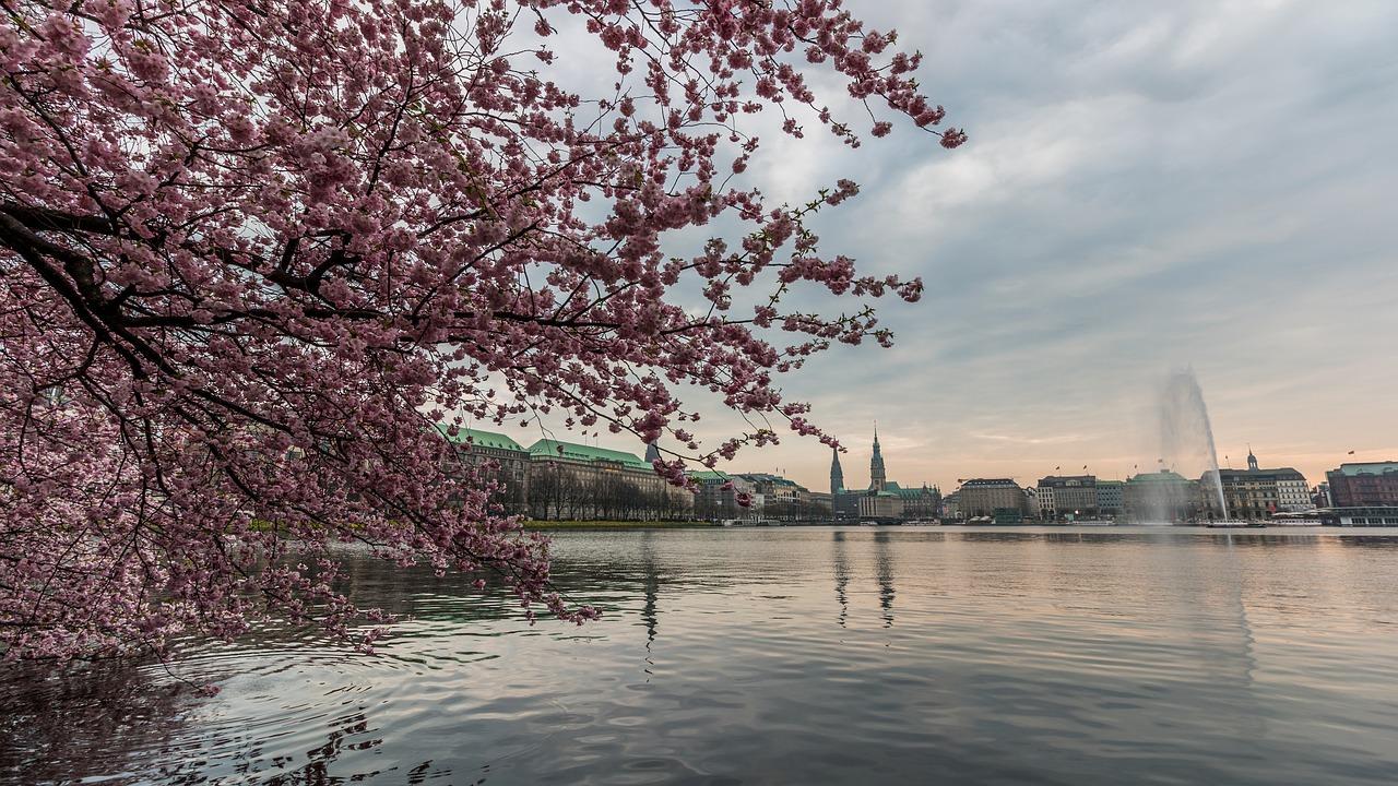 Hamburga, parki, japānas dārzs, lielākais eiropā, sakura, ziedoši ķirši, stadtpark, planten un blomen