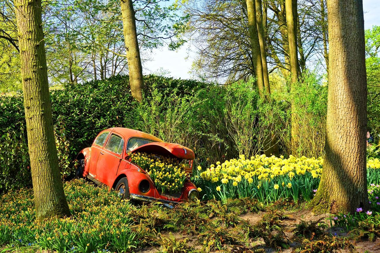 Car in tulip park, Keukenhofa parks, Tulpes holandē, dzeltenas tulpes
