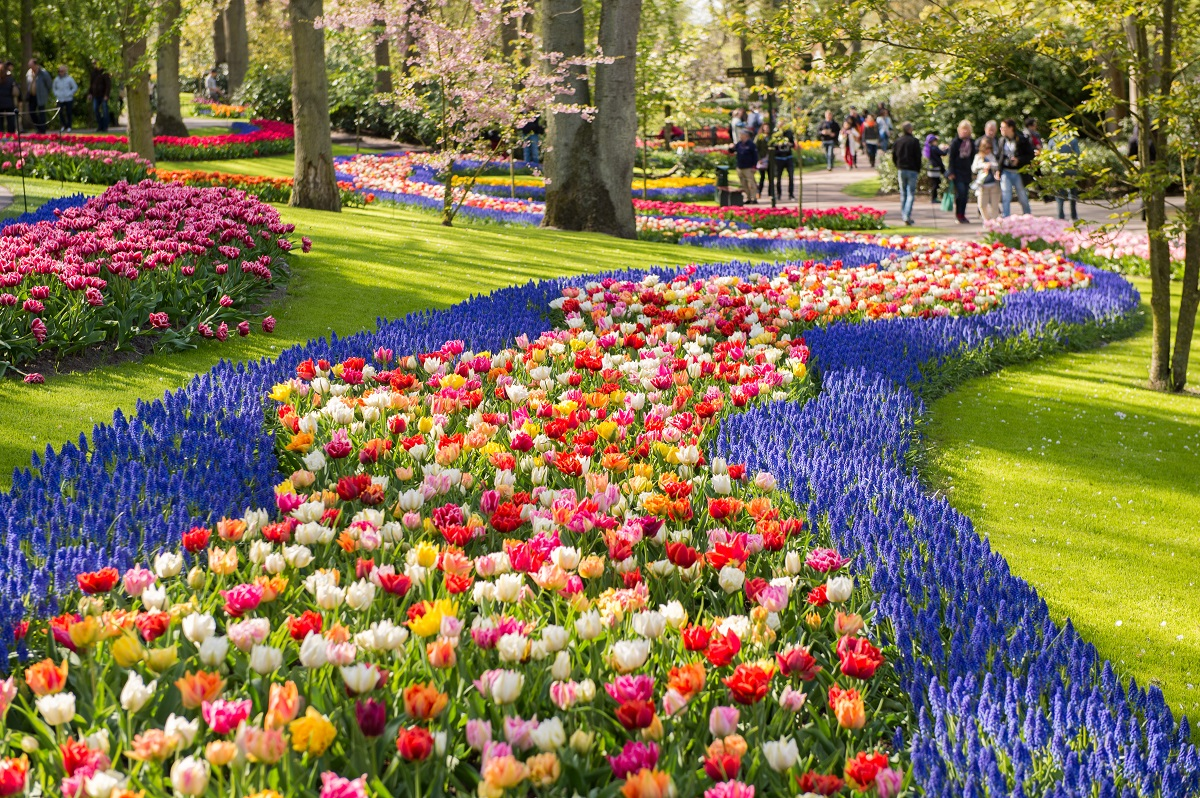 Keukenhofas ziedu parks, Lisse, ziedu parks, sīpolpuķu parks, tulpju daudzveidība